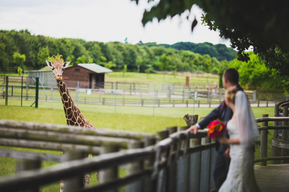 bride and groom and giraffe at Banham Zoo