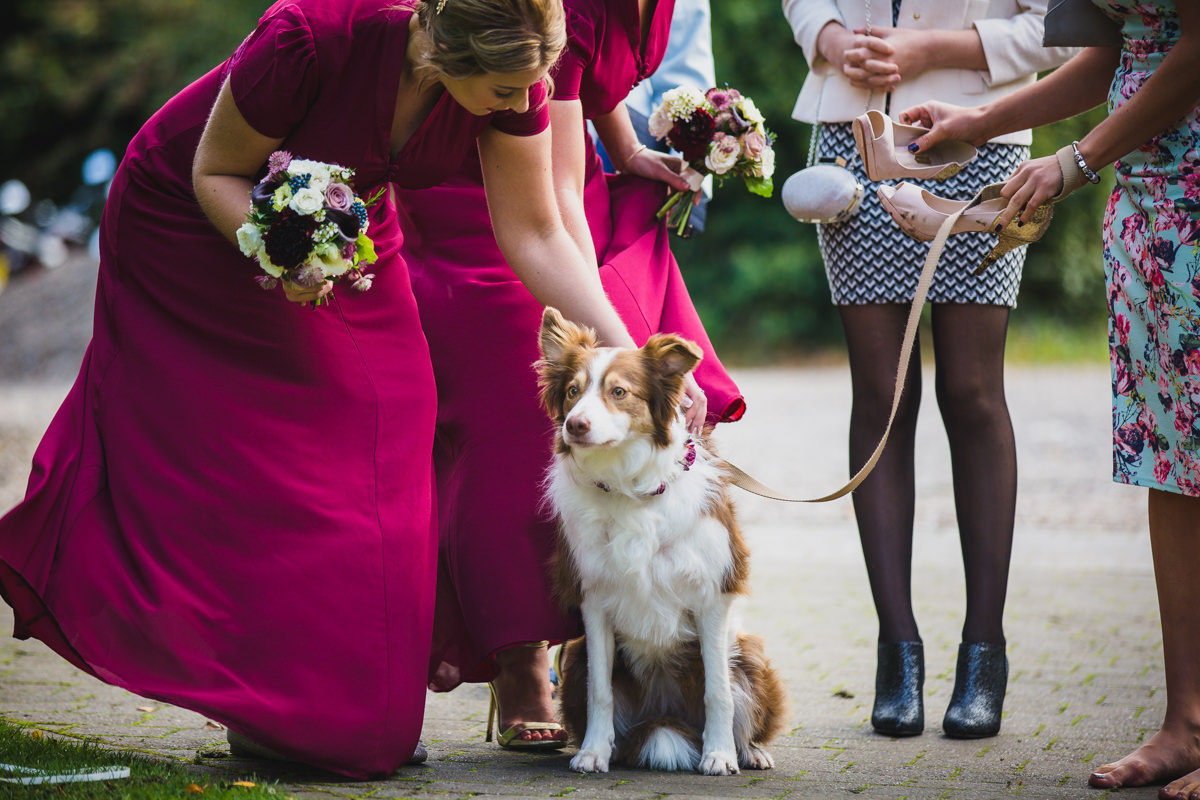 bridesmaid petting dog